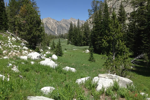 Marshy valley in South Fork of Cascade Canyon