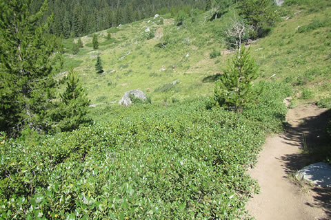 Open terrain leading to the Beaver Creek drainage.