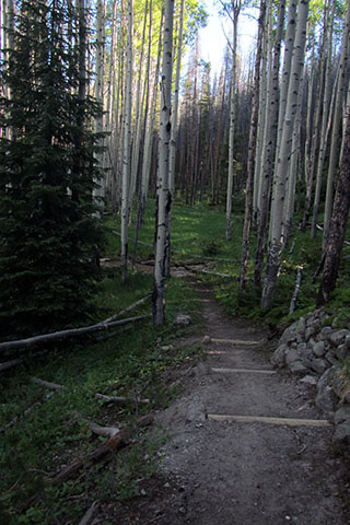trail through the aspens leading to the Onahu Creek Trailhead