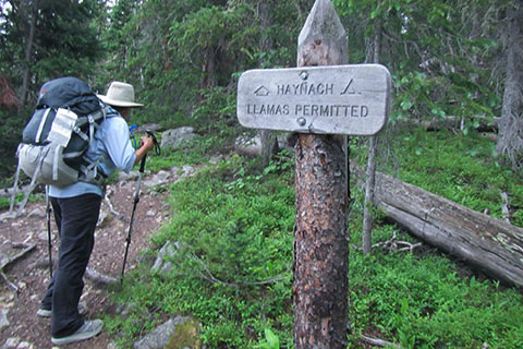 Junction with the Haynach Lake spur trail. Hiker starts up the steep trail. Photo includes trail sign