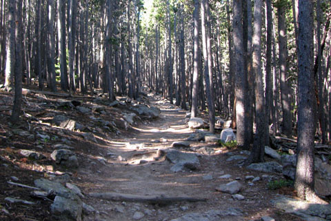 trail as it starts through the woods