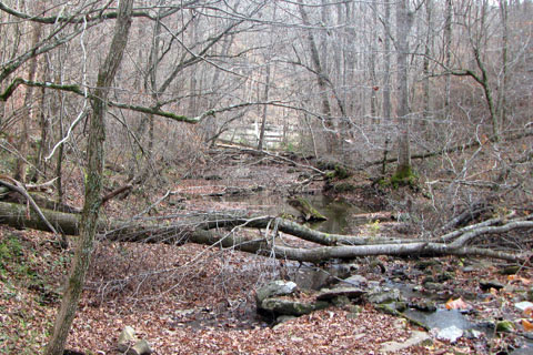 looking up Bobo Creek