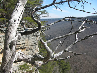 Stone Door Overlook & Savage Gulf - Big Creek Loop Trails - Savage Gulf Natural Area